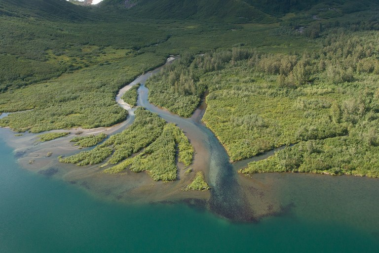 Thousands of salmon converge at a the mouth of a tributary stream in Lake Beverley's Golden Horn, just above Lake Nerka, for the final ascent to their spawning sites.