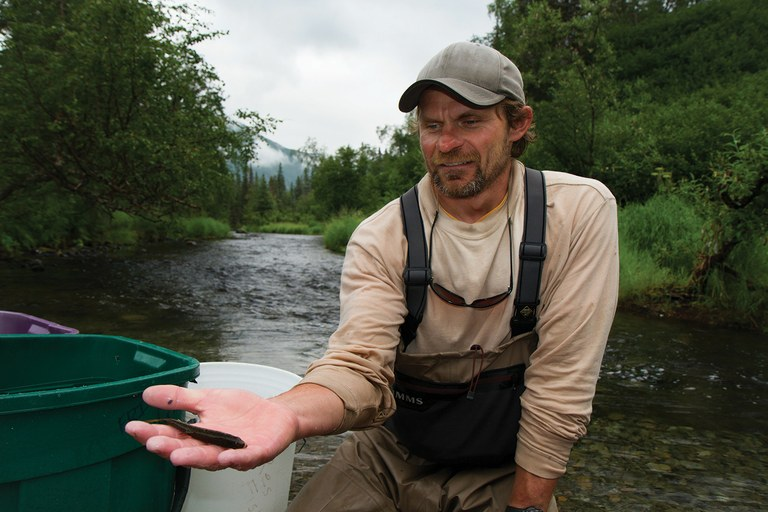 "Daniel Schindler is in his 17th year in the field along the rivers and streams of Alaska's Bristol Bay ecosystem. Along Lynx Creek, for instance, he nets and assesses small ""resident fish"" that don't migrate but get much of their nutrition by gobbling salmon eggs."
