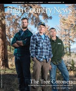 The Tree Coroners