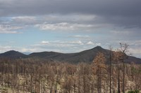 Snapshots of a forest two years after a megafire