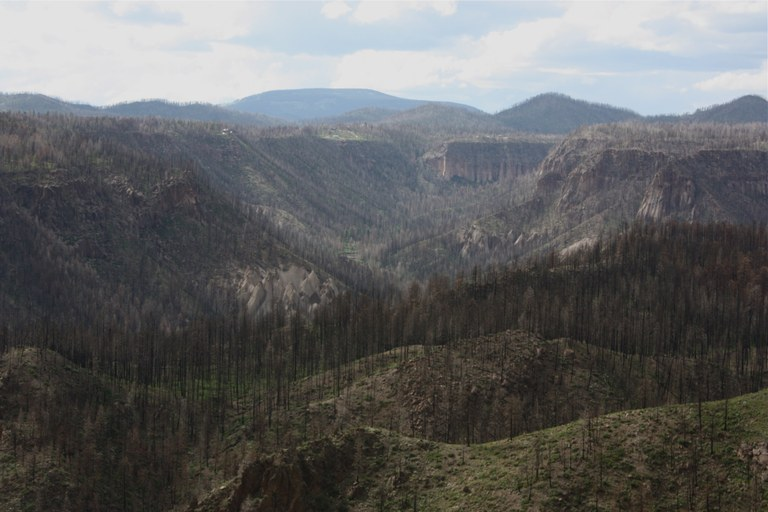 Cochiti Canyon provides a striking view of the extent of tree mortality in the 2011 Las Conchas Fire.