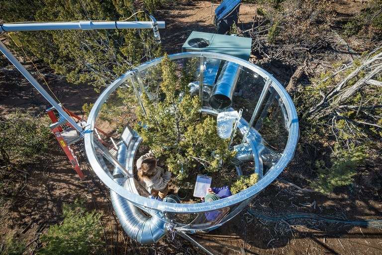 Researchers in Nate McDowell's research facility at Los Alamos check on a tree inside a chamber that allows them to keep the temperature 9 degrees Fahrenheit warmer than ambient air.