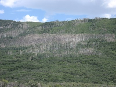 What's happening in other Western forests?