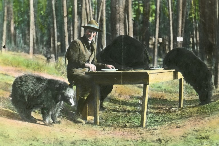 Former Yellowstone National Park Superintendent Horace M. Albright feeding bears, circa 1922.