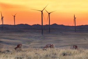 The Latest: First federal prosecution of wind farm bird deaths