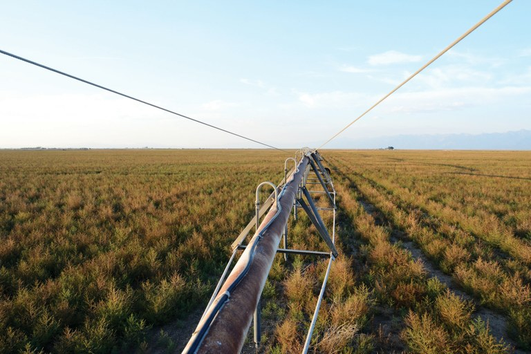 A center-pivot sprinkler stands idle in a field of weeds growing in perfect rows on the east side of Colorado's San Luis Valley.