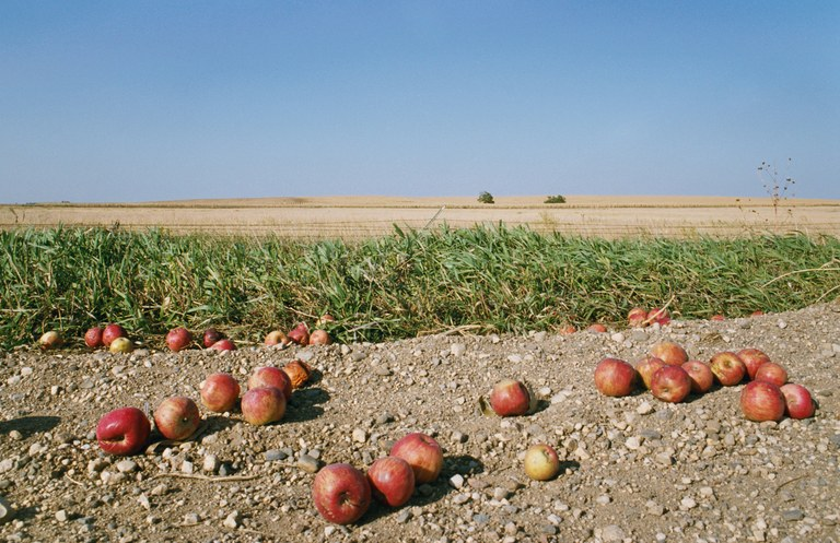 """Fallen Apples, 2007,"" from My Dakota"