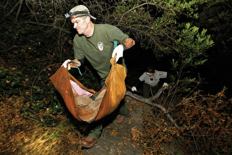 National Park Service biologist Jeff Sikich carries a tranquilized young male mountain lion back to a team waiting to attach a GPS tracking collar to the animal in the Santa Monica Mountains, in late 2012.
