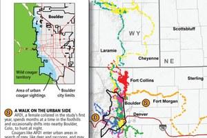 Researchers track Colorado cougars