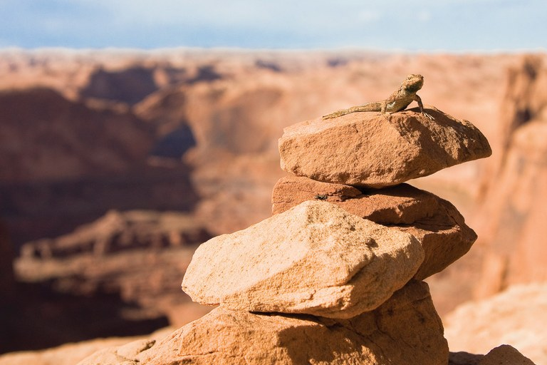 A lizard suns on a cairn near Grand Staircase-Escalante National Monument.