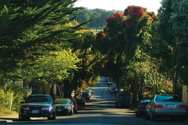 Diverse plantings along Bocana Street, in the Bernal Heights neighborhood of San Francisco.