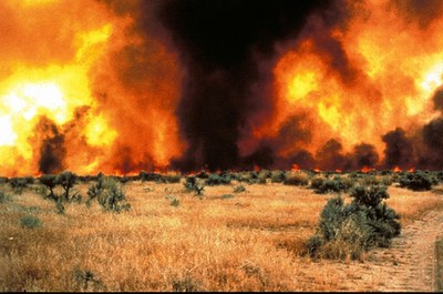 Emily Guerin on ranchers' and BLM's collaborative approach to fighting wildfire