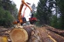 Seeking balance in Oregon's timber country