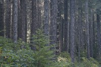 Northwest Forest Plan timeline