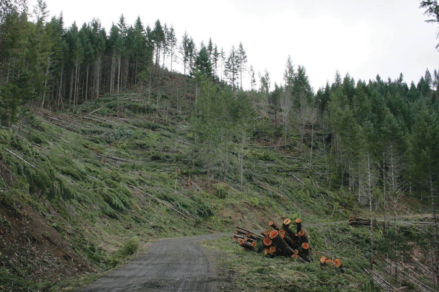 the issues of deforestation of the pacific northwest Processes of deforestation in north america this deforestation process is predictable since good agricultural areas tend to remain clear while marginal lands, cleared initially.