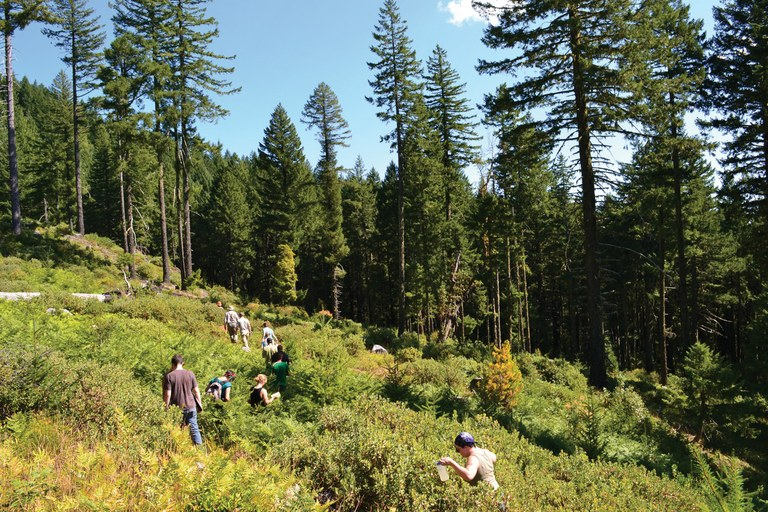 "Jerry Franklin leads students through an old cut that was never replanted, showing the diverse ""early seral"" habitat tha"