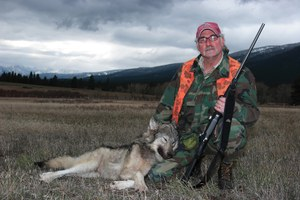In the field with a Montana couple hunting wolves