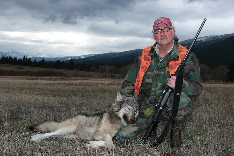 Montana aims to maintain a population of roughly 400 to 500 wolves, and has approved more aggressive hunts. Here, a wolf taken in Montana's Bitterroot Mountains by an unnamed hunter.