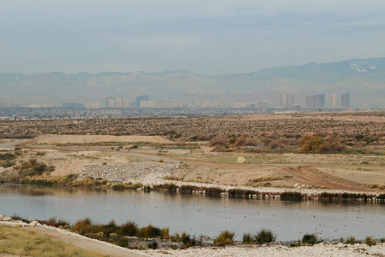 The Las Vegas Wash was once a seasonal arroyo, but now runs year-round as treated wastewater from the Las Vegas metro area flows back to Lake Mead. Revegetation projects have encouraged bird and animal life along the apparently healthy waterway.