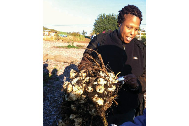The Beacon Food Forest reaches fruition: Cheryl Wilder with a bouquet of freshly dug sunchokes.