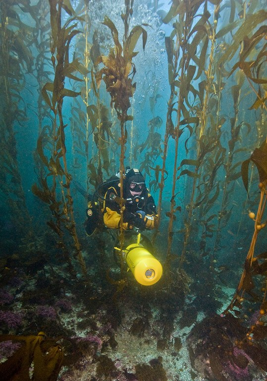 SRC Archeologist Andres Diaz navigates through the kelp at Channel Islands National Park off the coast of California.