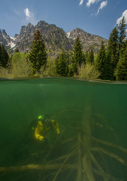 Grand Teton National Park diver Rick Guierruri examines the remains of the submerged forest in Jenny Lake.