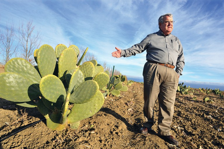 The prickly pear as California crop