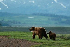 A new century with carnivores