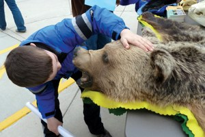 Talking with kids about grizzlies