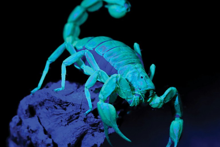Hunting for scorpions — High Country News