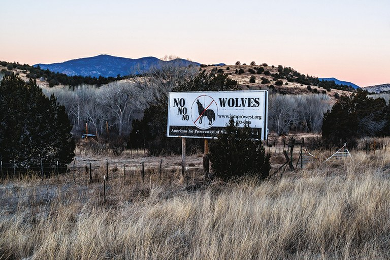 Anti-wolf sentiment is still strong in parts of New Mexico, but some ranchers now see the value of working with environmentalists.