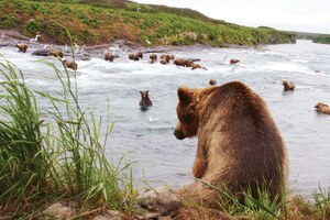 Best place to see a crowd of grizzlies