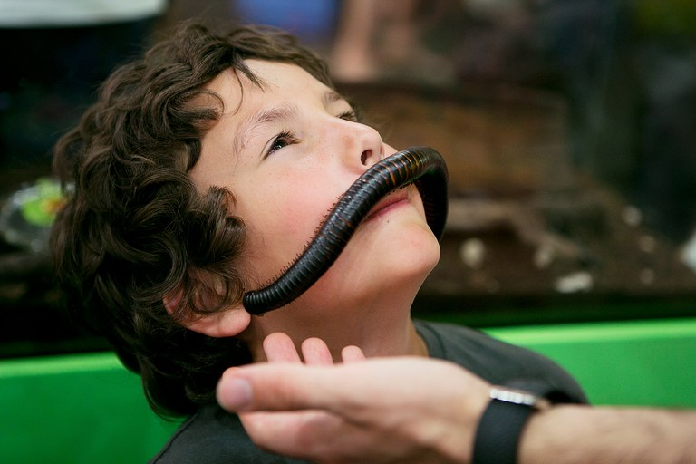 BRITISH COLUMBIA Giant African millipede mustache at the Victoria Bug Zoo.