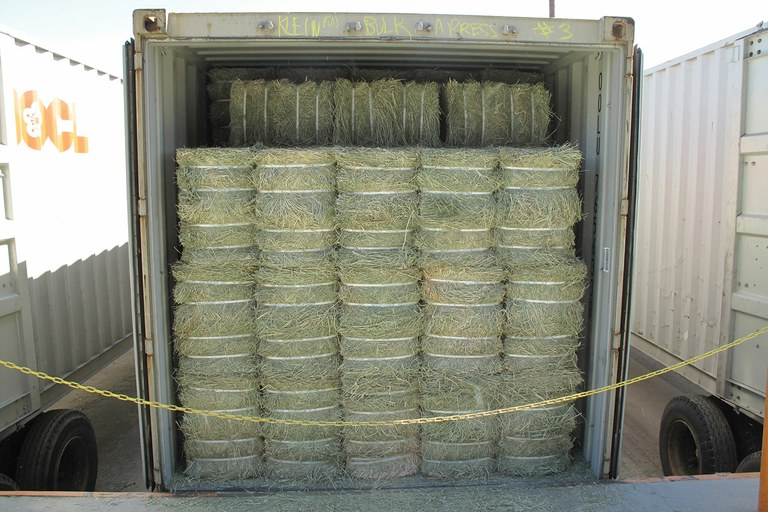Alfalfa hay bales loaded in a container for shipping to China, home to an estimated 42 million head of cattle.