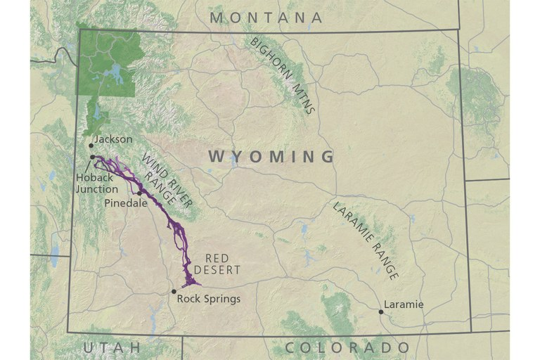 A map shows the mule deer migration path, covering a 300 mile round-trip through western Wyoming