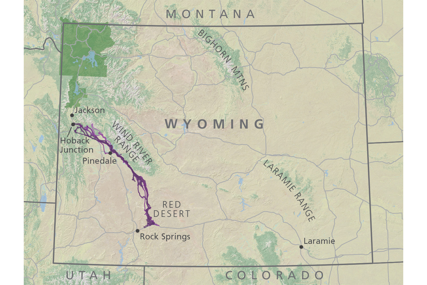 Mulies On The Move Mulie On The Move High Country News Know