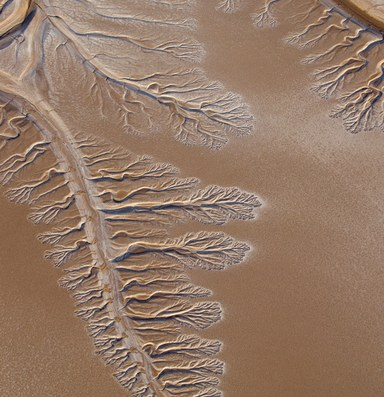 The Latest: Colorado River Delta update