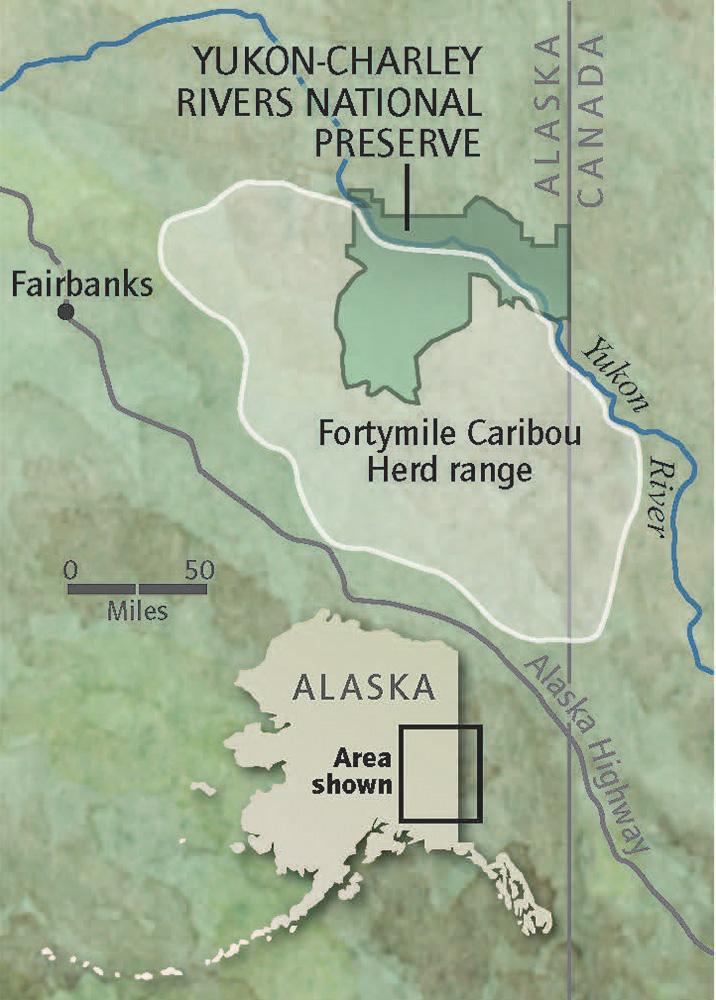 Alaska S Wildlife War Alaska S Wildlife War High