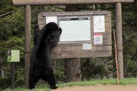 Durango bear attack, a driver swerves to avoid bees in Montana, Tucson wins worst streets award and more.