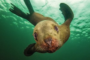 Oceanic photos and call to action