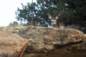Mule deer in decline, crude oil spills and violence against federal staffers.