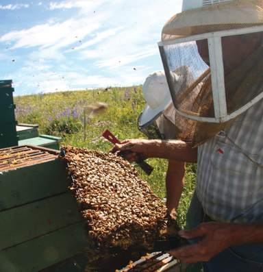 Beekeepers vs. invasive species rules on federal lands