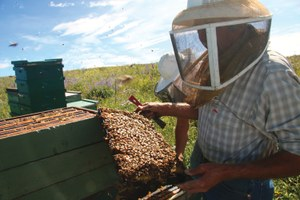 Beekeepers vs. invasive species rules on federal lands