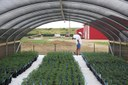 The Silicon Valley of marijuana