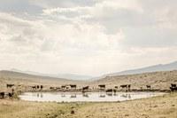Photographing Wyoming Prairies