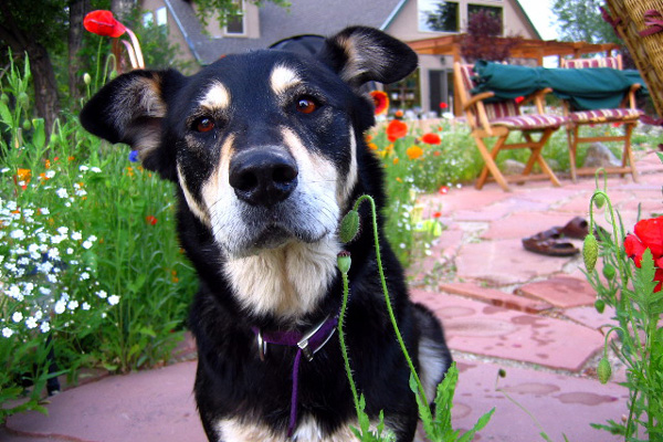 essay heart of a dog To write a great essay, think and care deeply enter my dog tulip, a book-length essay dedicated entirely to a poorly at its heart, that's all a great essay.