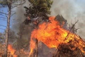 Latest: Arizona forest restoration project falls short