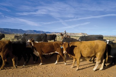 A recent history of land management in the Escalante region