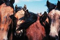 Hollywood horse havoc