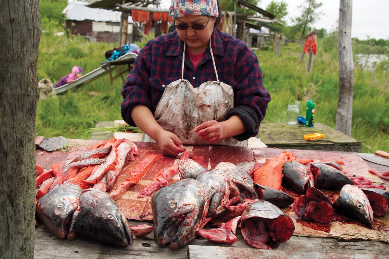 Salmon power salmon power high country news for Alaska fishing camps